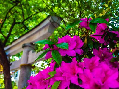 Nihon_arekore_02119_Torri_and_flowers_100_cl