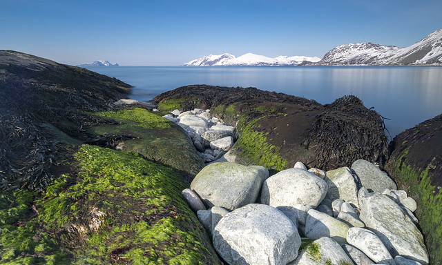 Arctic seascape in spring