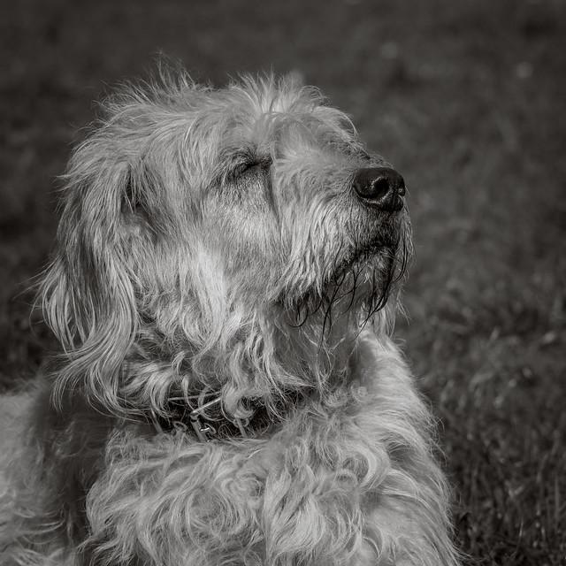 My Dogs (II)