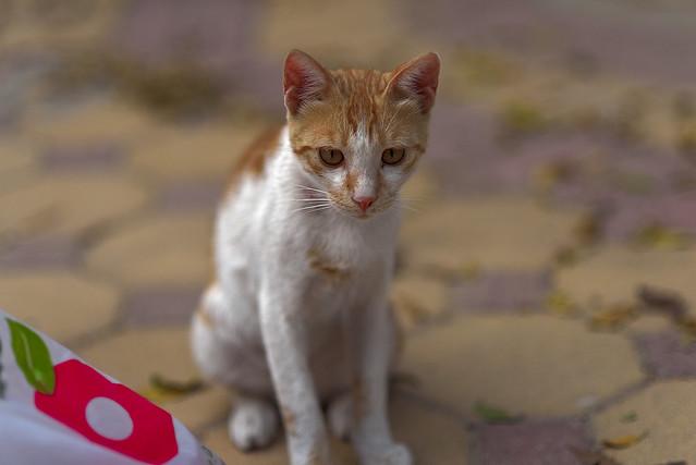 Skittish Kitten