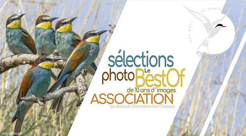 """Sélections photo le """"Best Of"""" de 10 ans d'images"""