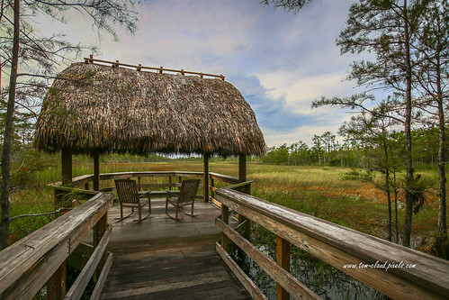 tiki hut tilihut boardwalk walkway marsh grass grasses trees sky clouds cloudy weathermlandscape nature mothernature outdoors grassywaters preserve grassywatersprederve westpalmbeach palmbeachcounty florida usa chair rockingchair cypress cypresstrees