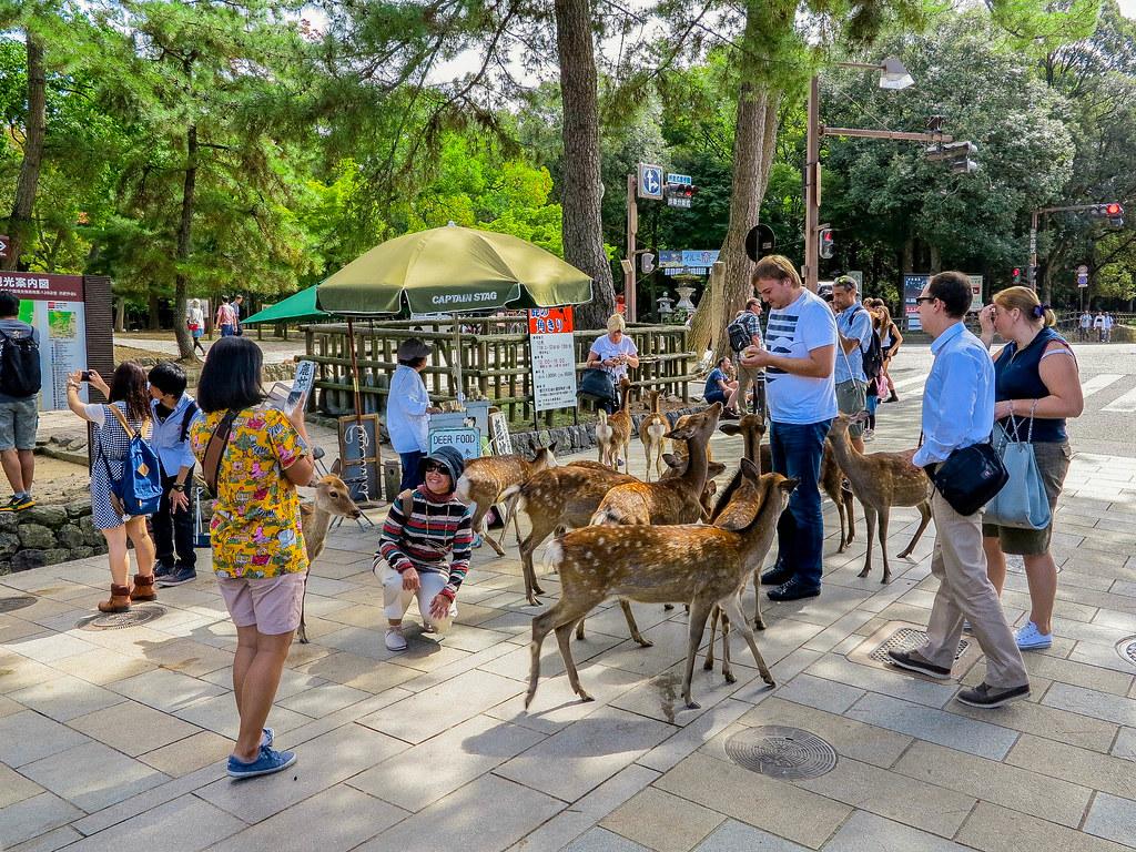 Ciervos en la ciudad de Nara en Japón