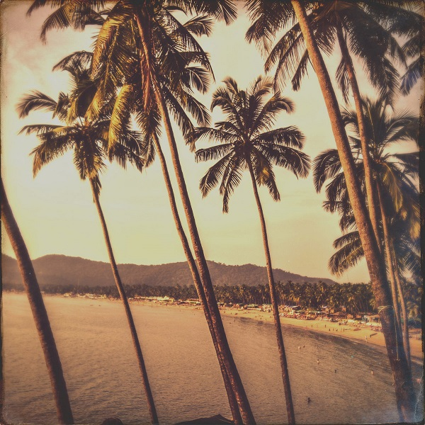 Work Drugs - True Palms