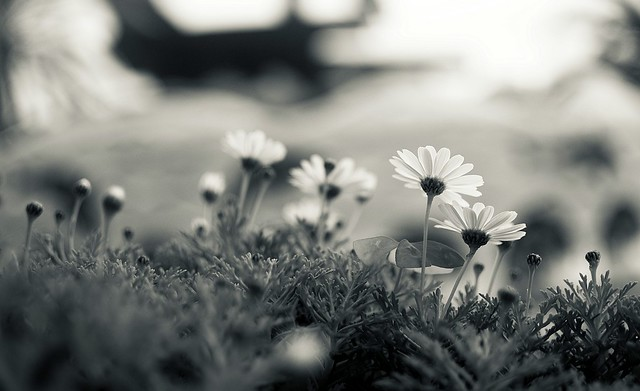 All Flowers Bend Towards The Music