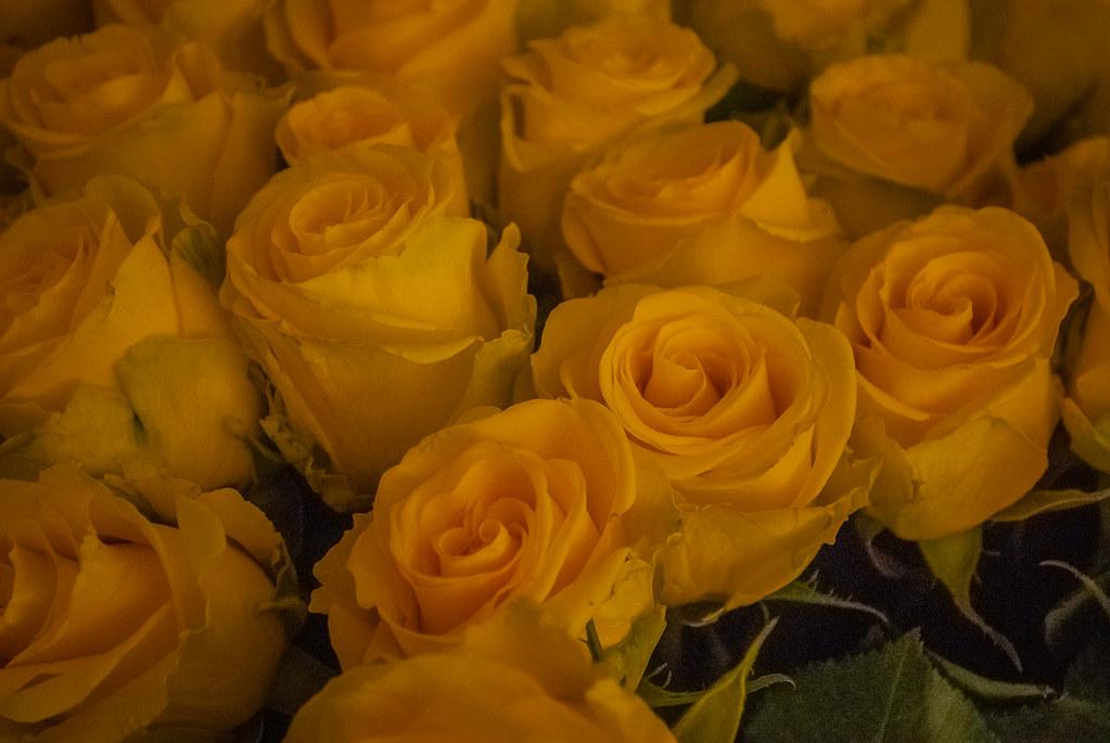 Beautiful roses 14:55:57 DSC_5280