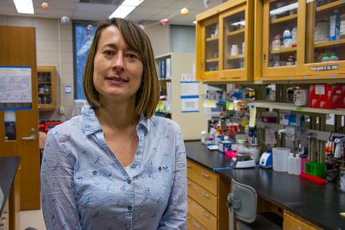 Joanna Sztuba-Solinska is an assistant professor of biological sciences in Auburn University's College of Sciences and Mathematics.