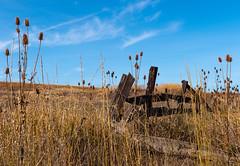 Folsom Farm Fence Landscape