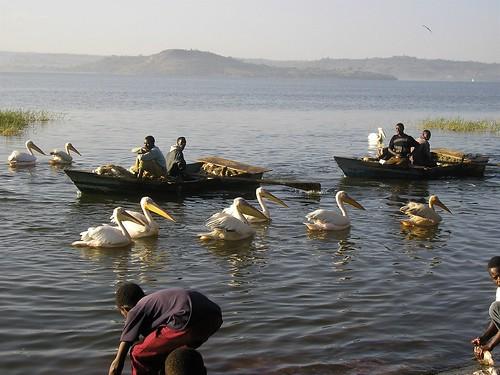 fish market awassa ethiopia äthiopien africa fishmarket