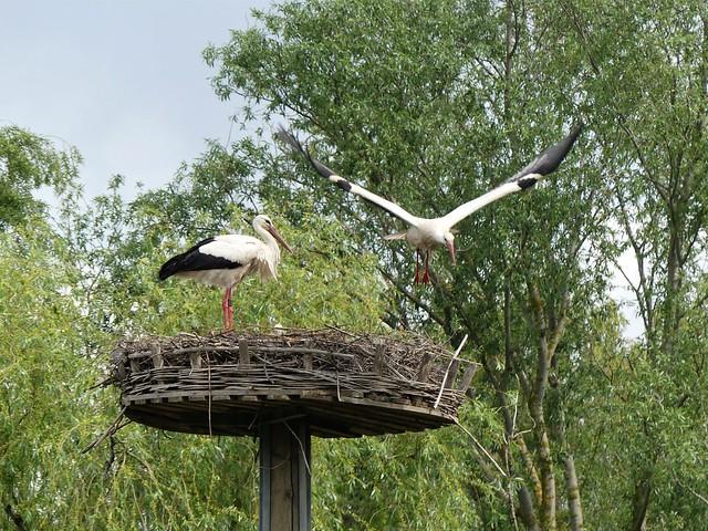 Naturschutzgebiet Kleinostheim
