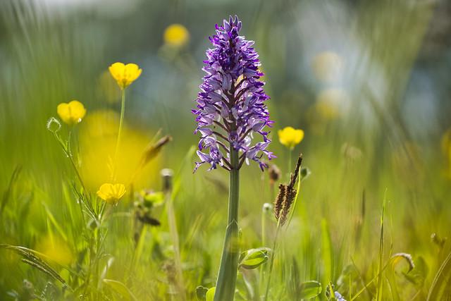 Orchideen Zeit
