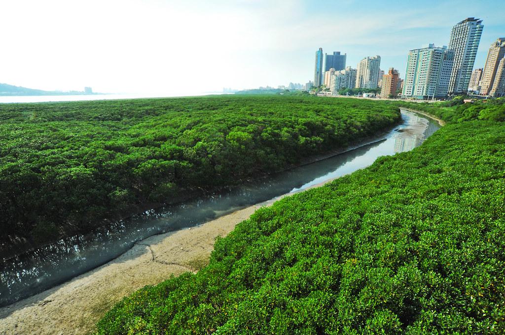 位在淡水河口的紅樹林自然保留區。圖片來源:林務局