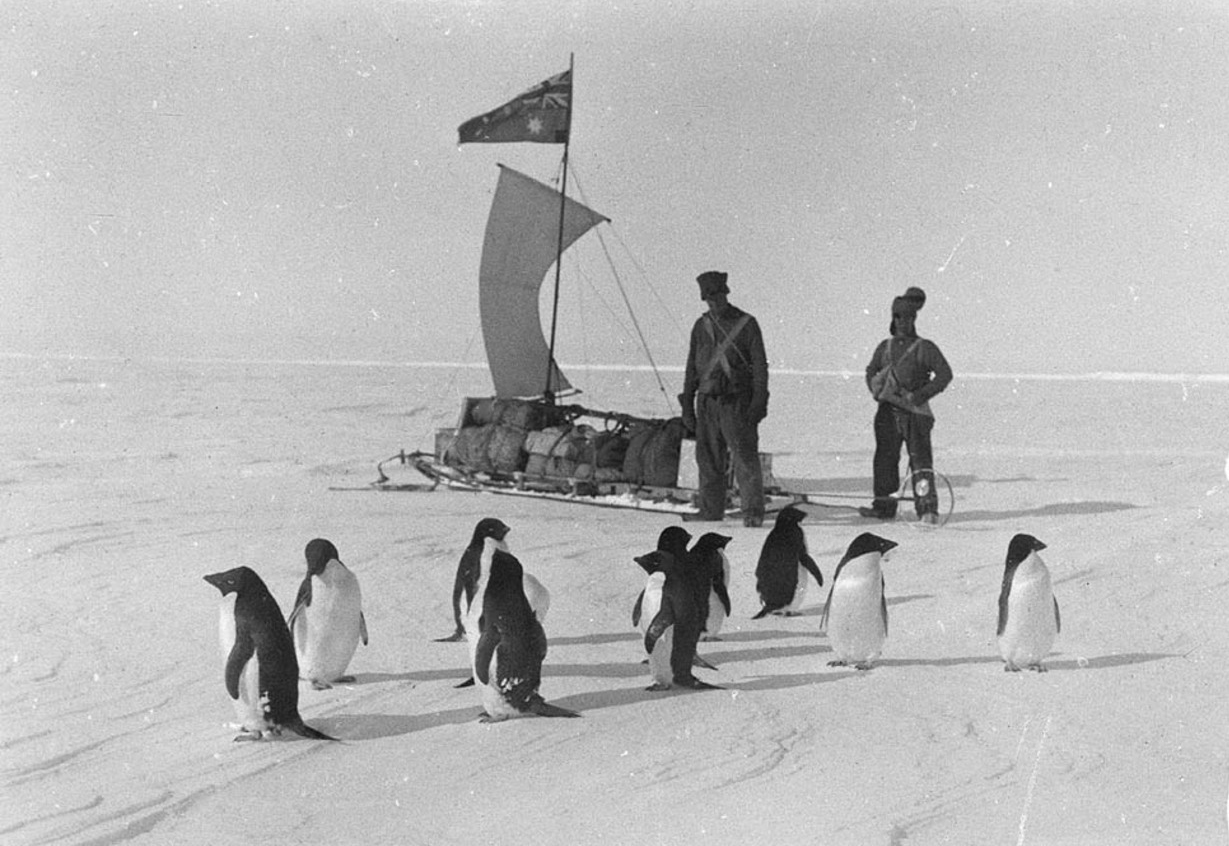 A band of Adelie penguins met on the floe ice, Queen Mary Land, ca. 1912, by Andrew D. Watson
