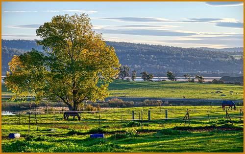 luminosity7 nikond850 launceston tasmania australia goldenlightmeditation earlyeveninglight goldenglow pastoralview ruralscene sunset horses tamarriver shadows landscape