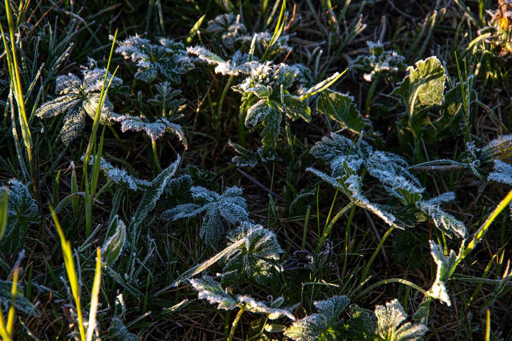 Mäßiger Bodenfrost im Mai