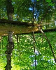 #UpsideDown #reflection