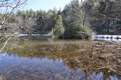 Little Glade Mill Pond 6687