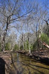 Stream at Little Glade Mill Pond 6707