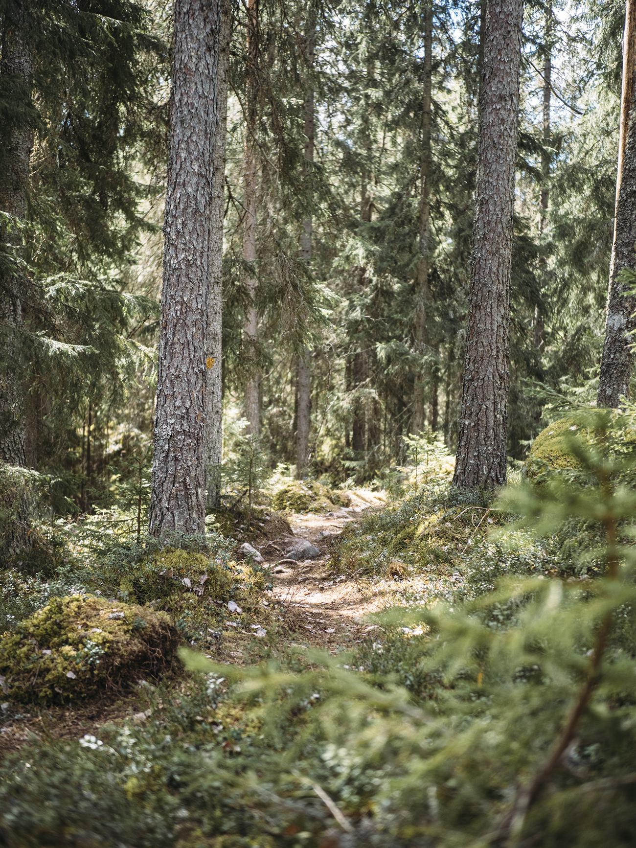 luonto8