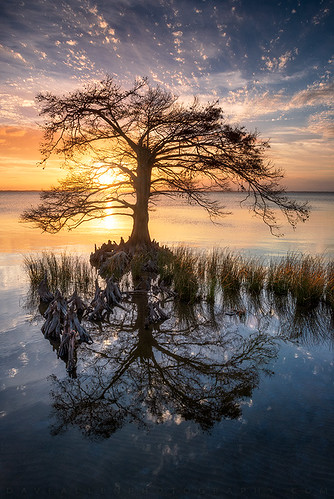 duck northcarolina nc obx tree cypress cypresstree explore outerbanks coast coastal beach lonetree reflection nature nikon sunset water landscape scenic