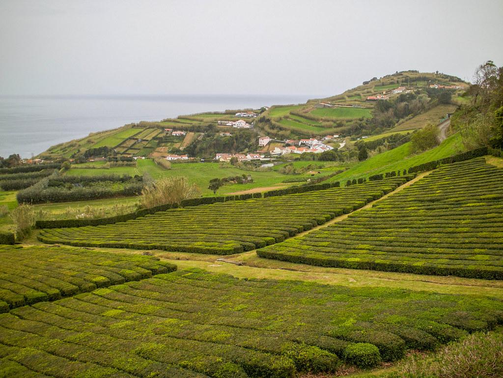 Porto Formoso es una de las plantaciones de té en São Miguel