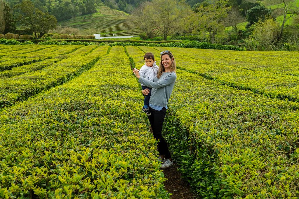 Campos de té de la fábrica Gorreana en Sao Miguel