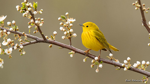 This week saw the first wave of Warblers.