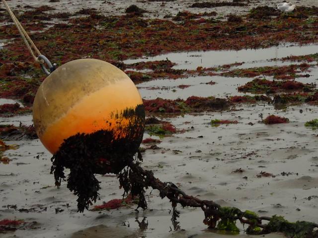 Marée basse low tide