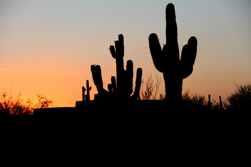 cactus saguarocactus sunsetphotography sunsets sunset sunsetcolors scottsdalearizona arizona desert silhouette