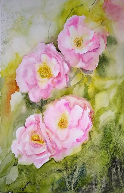 Rosas inventadas