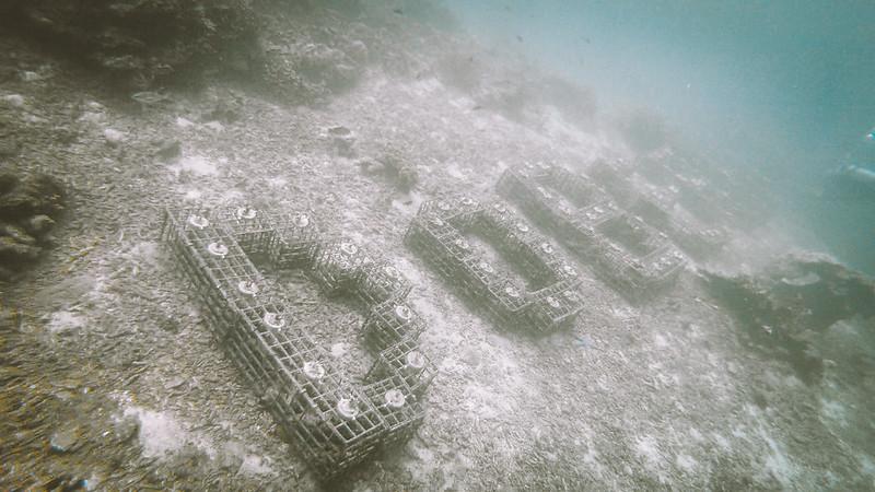 koralliprojekti2
