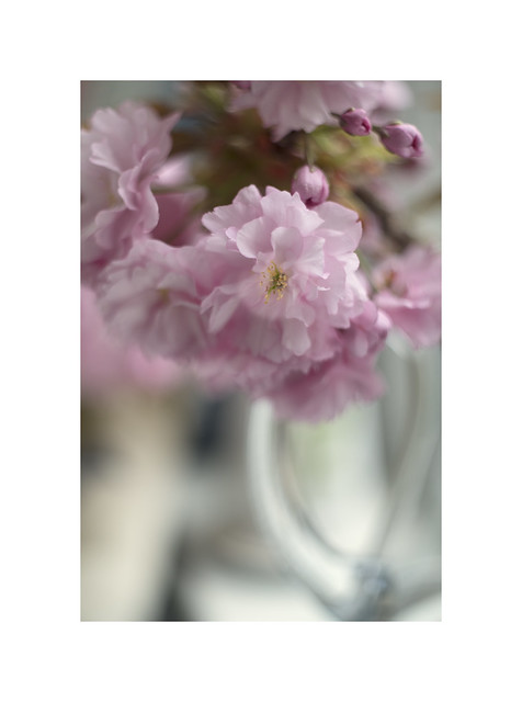 Cherry Blossom...in a glass vase