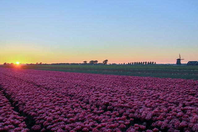 Sunset in de Beemster, the Netherlands