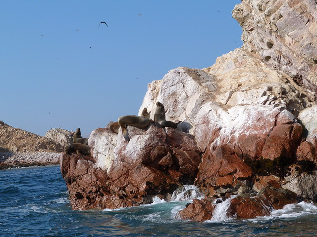Leones marinos en Islas Ballestas (Perú)