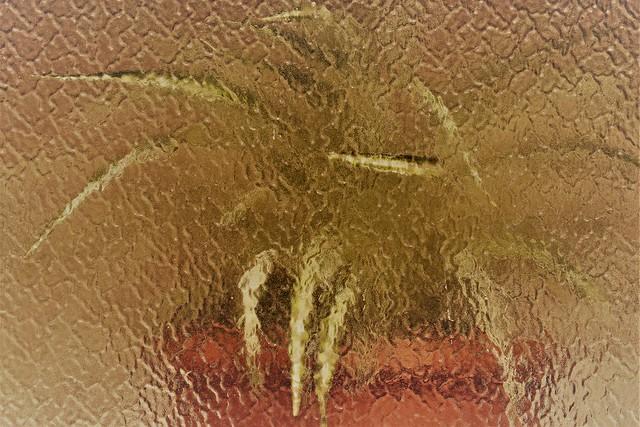 Xenomorph - Alien 1979