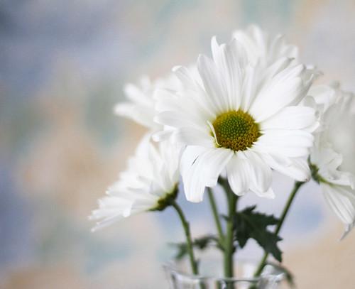 Daisy Still...(Explored)