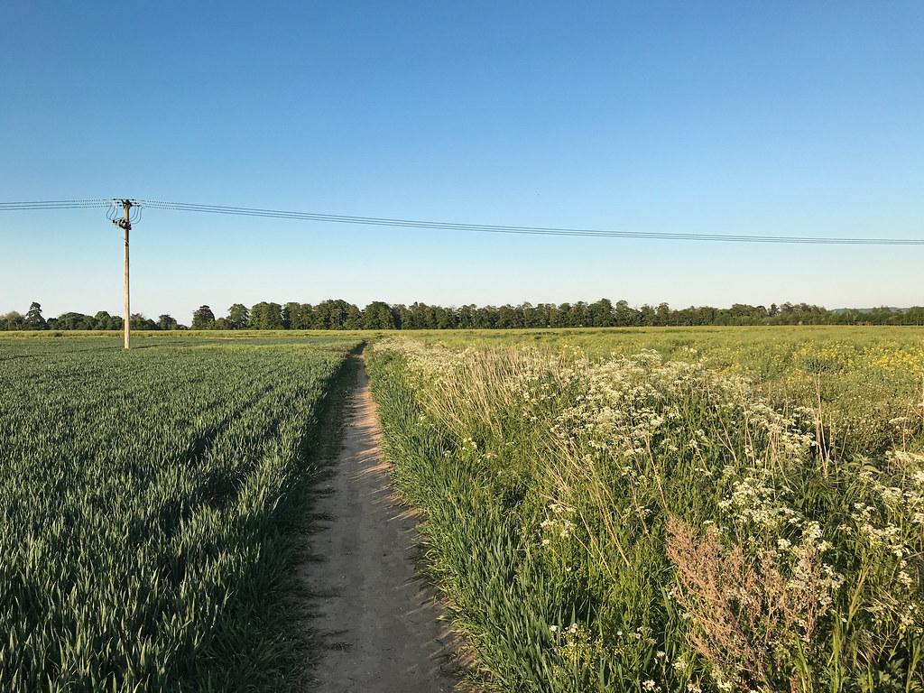 Evening run view