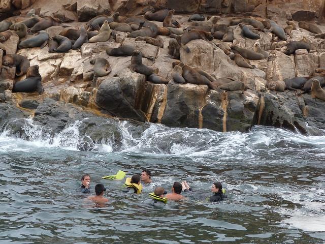 Nadando con leones marinos en Islas Palomino (Perú)