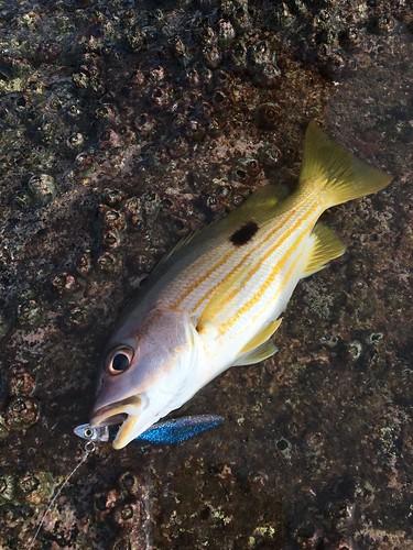 サムイ島 釣り 2020年5月 fishing in koh samui