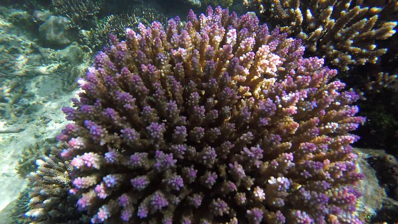 koralliprojekti4
