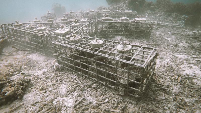 koralliprojekti6
