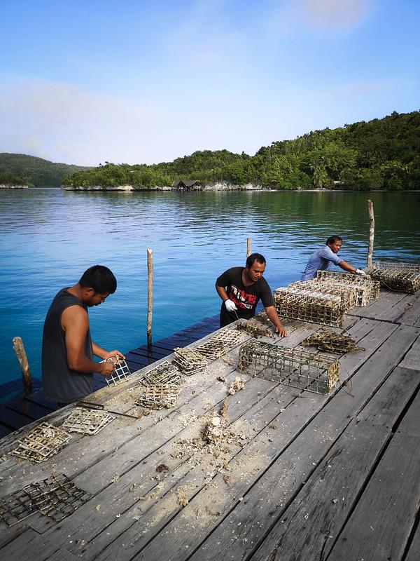 koralliprojekti13