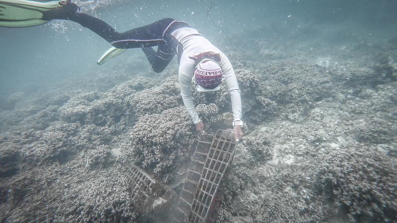 koralliprojekti14