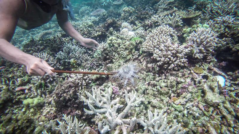 koralliprojekti16