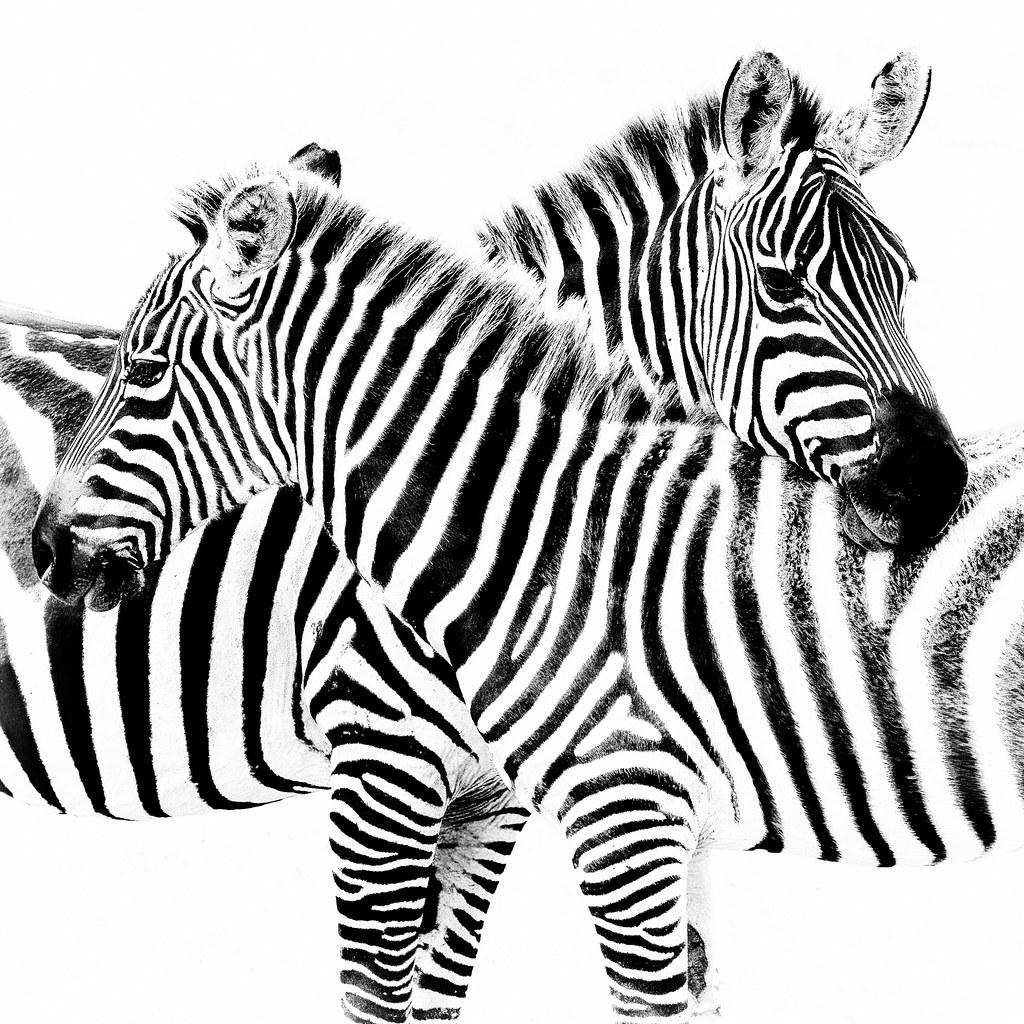 Striped III