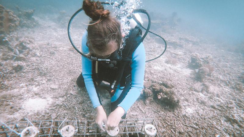 _korallinkiinnitus2