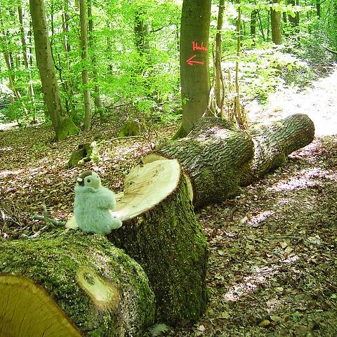 Karla Kunstwadl im Wald ... Foto von Margit H.