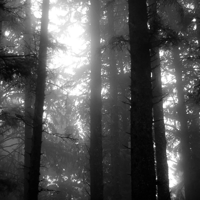 Forest In Fog 024