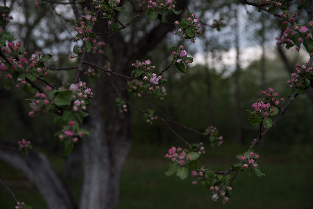 Майские дни в Тарханах.  Фотограф Александр Семенов