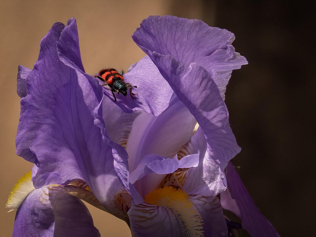Exploration dans la vallée des iris... + recadrages... 49867114003_8c85bd9555_b